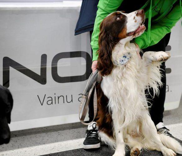 Perros entrenados para detectar a pasajeros contagiados
